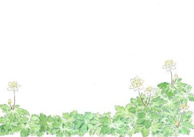 画像2: ポストカード(トトロの森の四季・春夏)